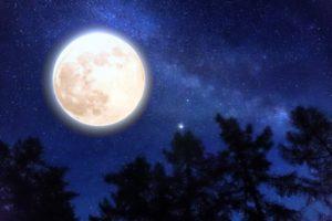 満月と木の影